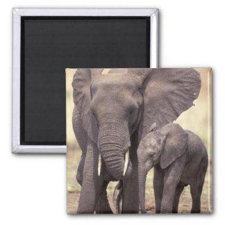 Africa, Tanzania, Tarangire National Park. 2 Square Magnet