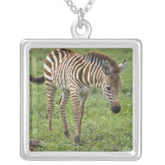 Africa. Tanzania. Zebra colt at Ngorongoro 3 Square Pendant Necklace