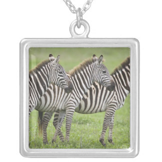 Africa. Tanzania. Zebras at Ngorongoro Crater in Square Pendant Necklace