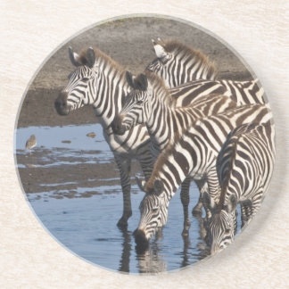 Africa. Tanzania. Zebras drinking at Ndutu in Beverage Coasters