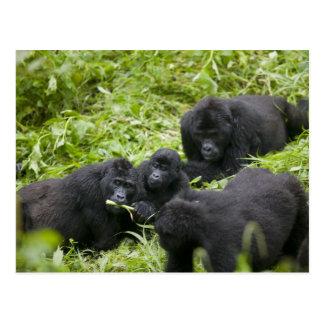 Africa, Uganda, Bwindi Impenetrable National 7 Postcard