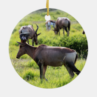 African Antelope on Safari in South Africa Ceramic Ornament