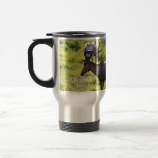 African Antelope on Safari in South Africa Mugs