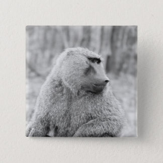 African baboon 15 cm square badge