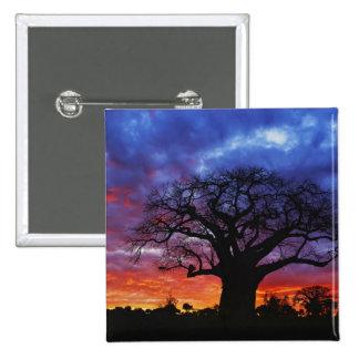 African baobab tree, Adansonia digitata, 2 15 Cm Square Badge