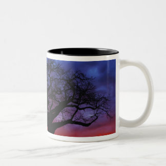 African baobab tree, Adansonia digitata, 2 Two-Tone Mug