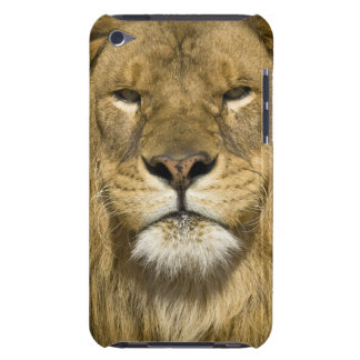 African Barbary Lion, Panthera leo leo, one of iPod Touch Covers