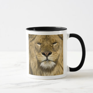African Barbary Lion, Panthera leo leo, one of Mug