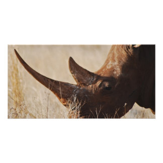 African black rhino with big horns photo greeting card