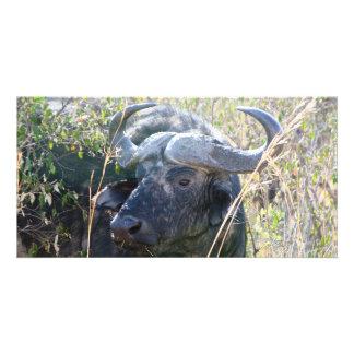 African buffalo custom photo card
