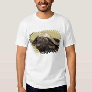 African Buffalo, Syncerus caffer, standing in T Shirts
