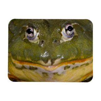 African Burrowing Bullfrog, Pyxicephalus Rectangular Photo Magnet
