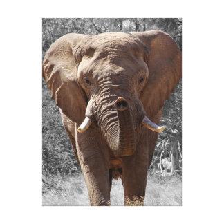 African bush elephant canvas print