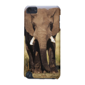 African Bush Elephant iPod Touch 5G Covers