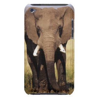 African Bush Elephant iPod Touch Cases
