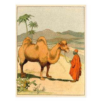 African Camel and Desert Traveller Postcard