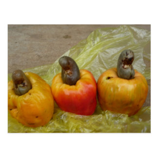 African Cashew Nut Fruit Postcard