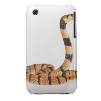 African coral snake (Aspidelaps lubricus) iPhone 3 Covers