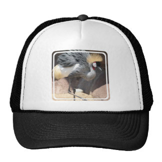 African Crested Crane Hats