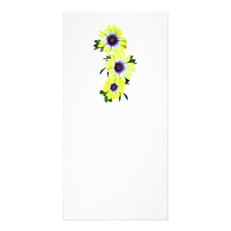 African Daisies Lemon Symphony Picture Card