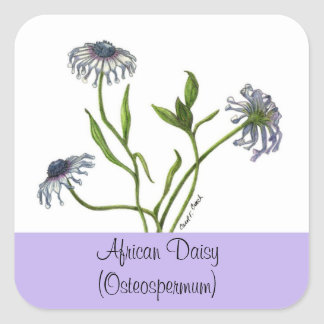 African Daisy Botanical Seal Square Sticker