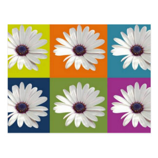 African Daisy Collage Post Card