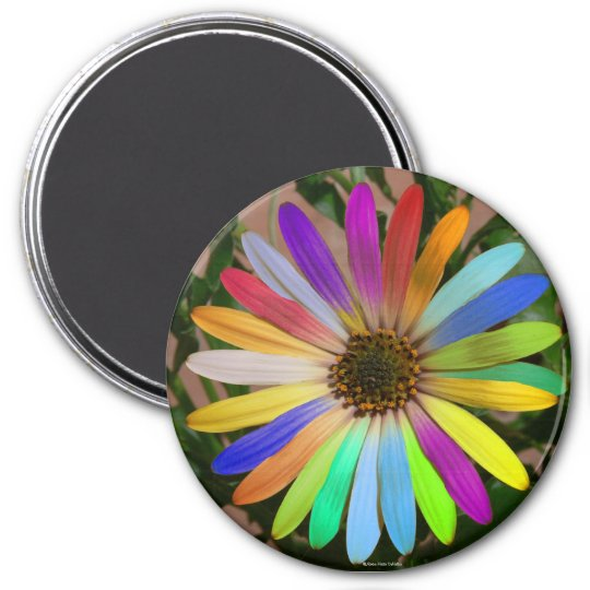 African Daisy Colourful-Magnet Magnet