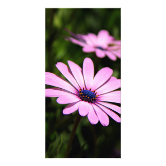 African Daisy Customized Photo Card