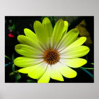 African Daisy Fluorescent Yellow Print