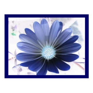 African Daisy Glowing Blue Postcard
