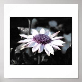 African Daisy Half Black & White Print