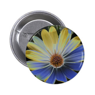 African Daisy Lapis and Gold Button