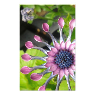 African daisy personalized stationery