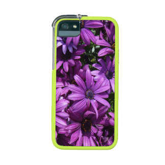 African daisy photo case case for iPhone 5