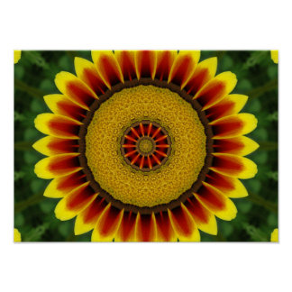 African Daisy Posters