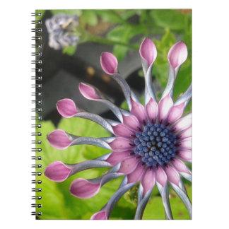 African daisy spiral notebooks