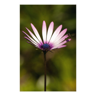 African Daisy Stationery