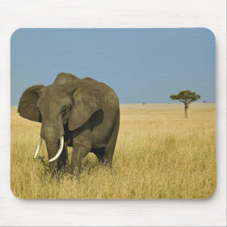 African Elephant grazing in tall summer grass, Mouse Pad