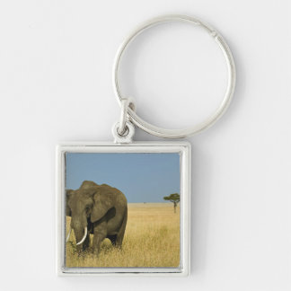 African Elephant grazing in tall summer grass, Silver-Colored Square Key Ring