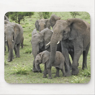 African Elephant herd, Loxodonta africana, 2 Mouse Pad