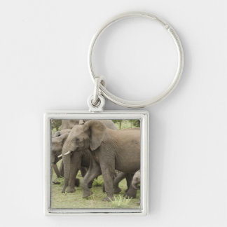 African Elephant herd, Loxodonta africana, 3 Silver-Colored Square Key Ring