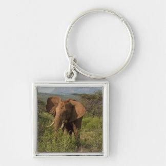 African Elephant, Loxodonta africana, in Samburu Silver-Colored Square Key Ring