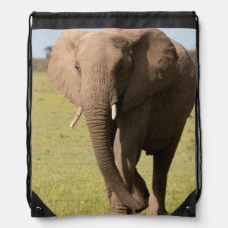 African Elephant (Loxodonta Africana), Maasai Backpack