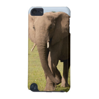 African Elephant (Loxodonta Africana), Maasai iPod Touch (5th Generation) Case