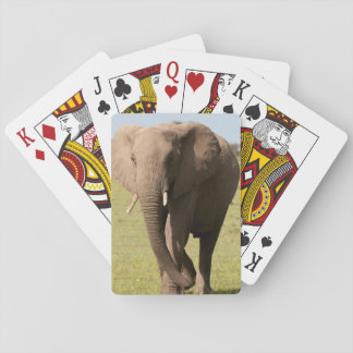 African Elephant (Loxodonta Africana), Maasai Playing Cards