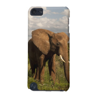 African Elephant, Loxodonta africana, out in a iPod Touch (5th Generation) Cover