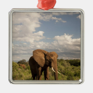 African Elephant, Loxodonta africana, out in a Silver-Colored Square Decoration