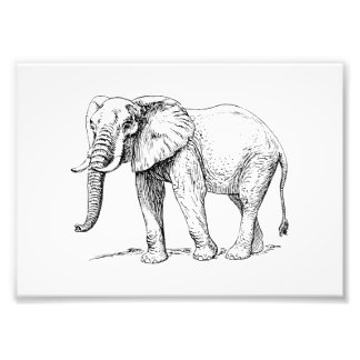 African Elephant Photo Print