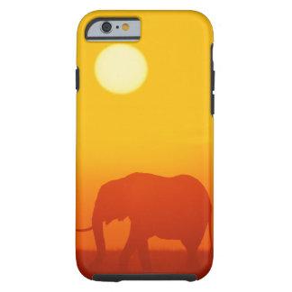 African elephant walking at sunset , Kenya , Tough iPhone 6 Case