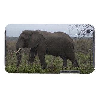 African Elephant Wildlife Wild Animal iPod Case-Mate Cases